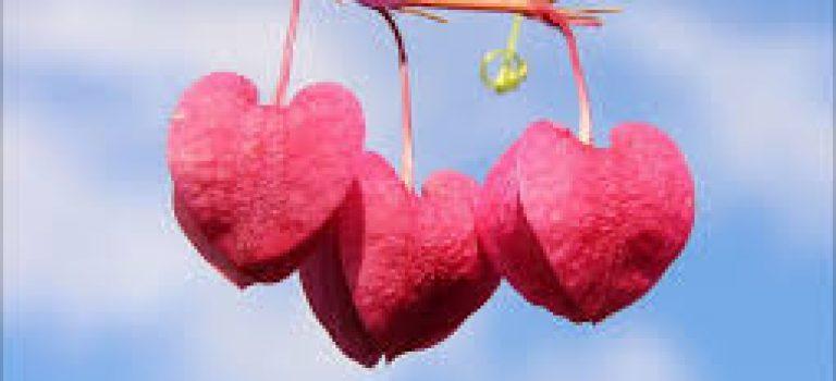 عشق از دیدگاه نوروسایکولوژی